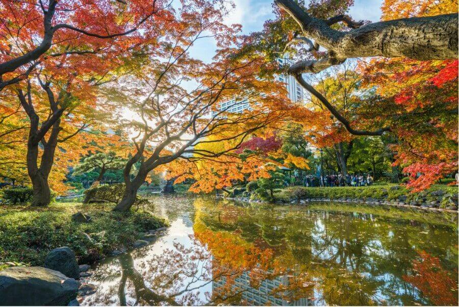 העונה הכי מתאימה לטוס לטוקיו