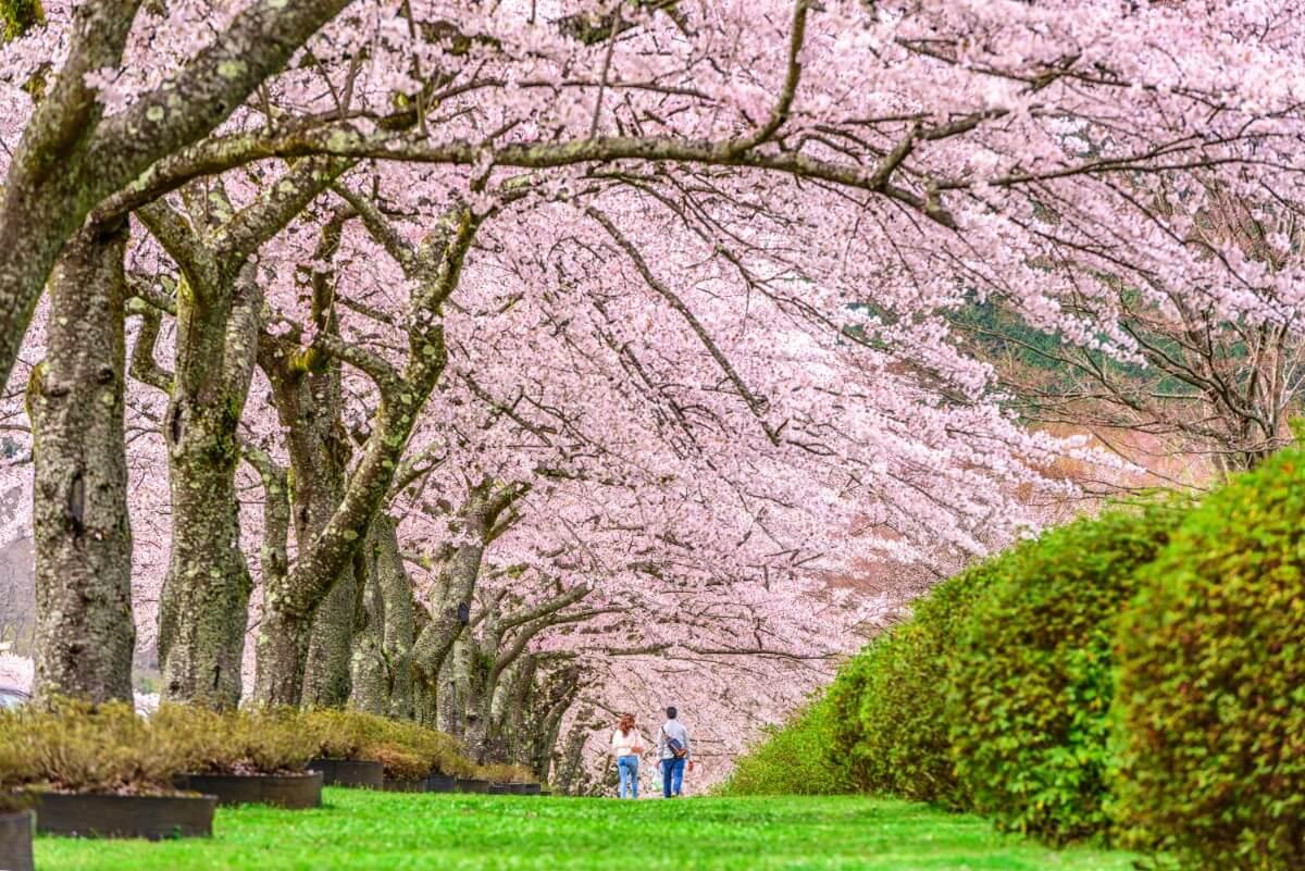 יפן באפריל – יפן בחודש אפריל