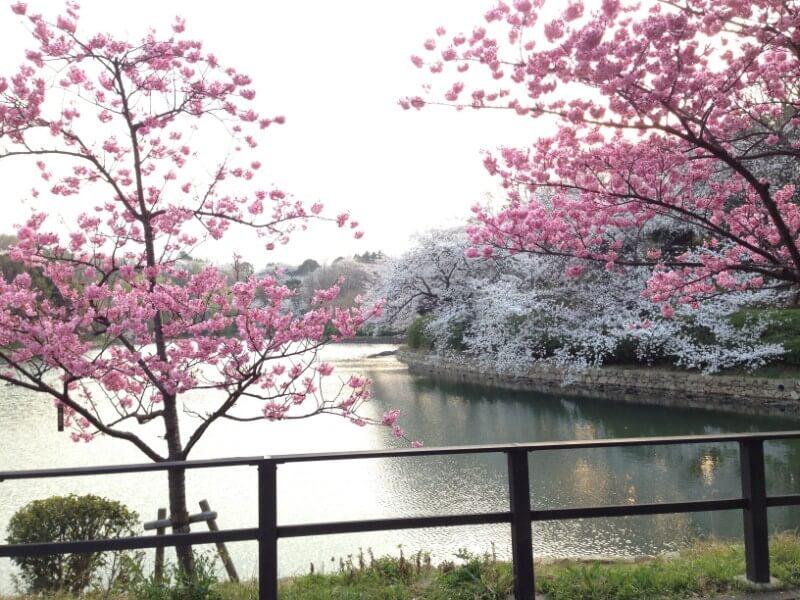 5 מקומות לטיולי טבע בפריחת הדובדבן מחוץ לטוקיו (מחוז קאנטו Kanto)