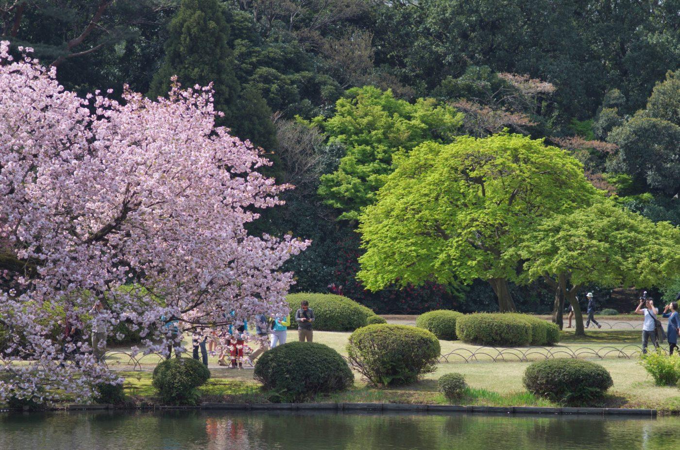 10 התצפיות הטובות ביותר לפריחת הדובדבן בטוקיו
