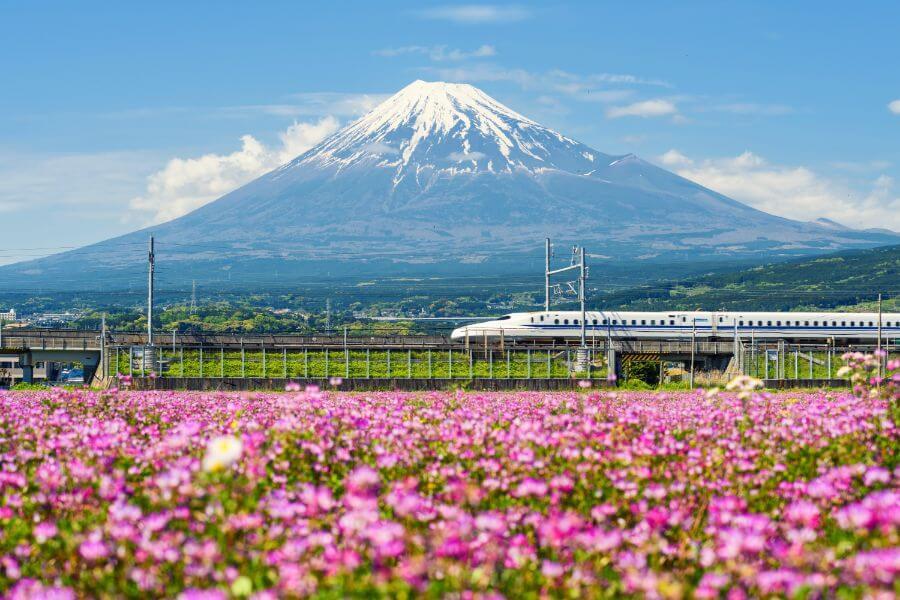 יתרונות טיול מאורגן ליפן