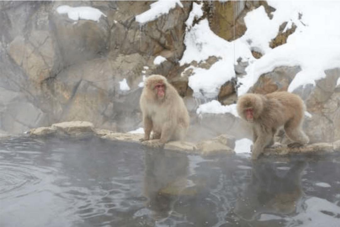 יפן בחורף